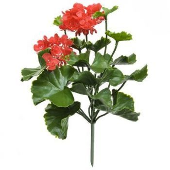 Geranium Bush UV