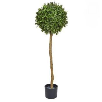 Topiary Buxus Ball Tree UV
