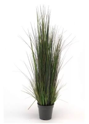 River Grass In Plastic Pot