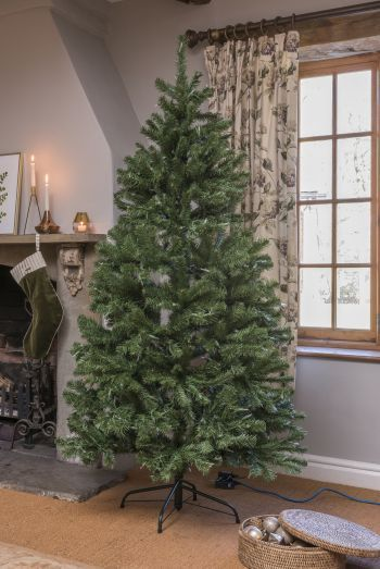 Luxury North Valley Spruce Christmas Trees