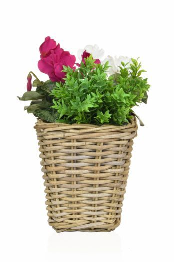 Cyclamen Mix Rattan Planter