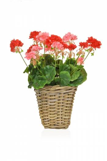 Geranium Mix Rattan Planter