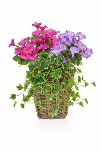 Petunia Mix Rattan Planter