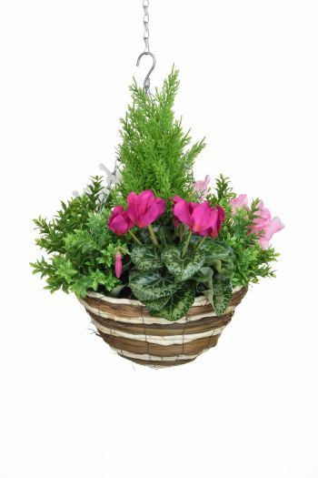 Cyclamen Mix & Greenery Medium Hanging Basket