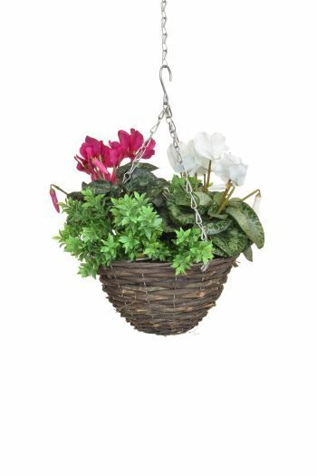 Cyclamen Mix & Greenery Small Hanging Basket