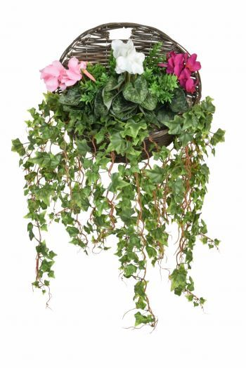 Cyclamen Mix & Ivy Wall Basket