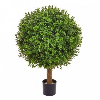 Buxus Topiary Ball