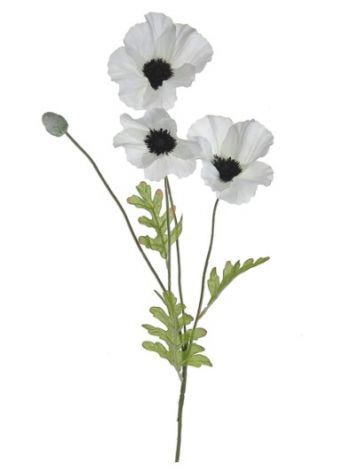 Poppy Single Stem