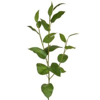 Lemon Leaf Spray
