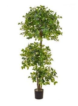 Schefflera Multi Layer Tree