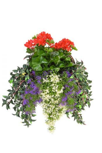 Geranium Deluxe Large Wall Basket UV