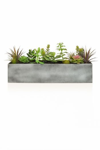 Mixed Succulents In Steel Trough