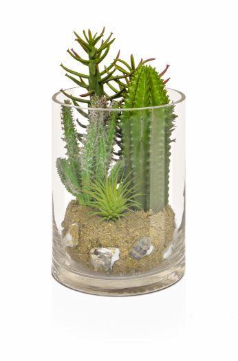 Cactus Mix in Glass Vase