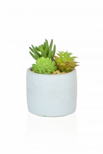 Succulent Mixed in round Pot