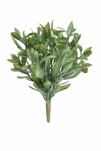 Magnolia Leaf Bush UV