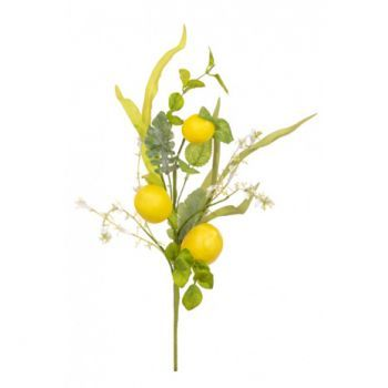 Lemon Foliage