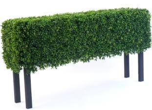 Boxwood Hedge with Legs