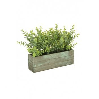 Eucalyptus Trough