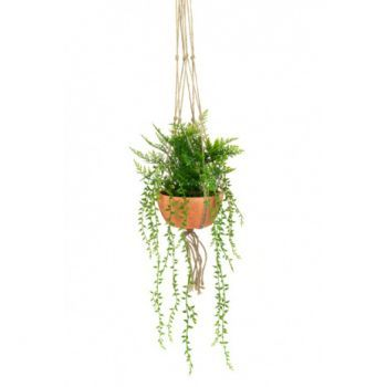 Hanging Potted Fern & Senecio