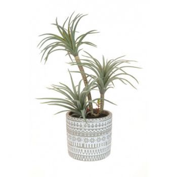 Airplant in Patterned Pot