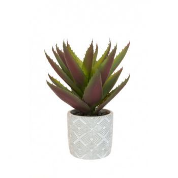 Aloe in Geometric Pot