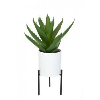 Aloe Pot and Stand