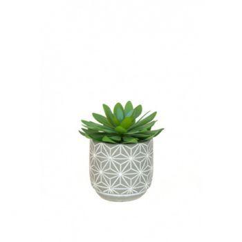 Cactus in Geometric Pot