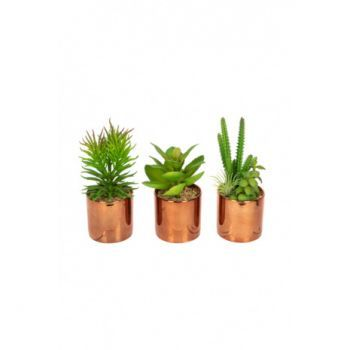 Succulents in Copper Pots 3 Pack