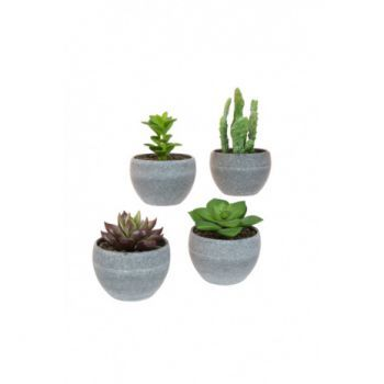 Potted Mini Succulent x4 Pack