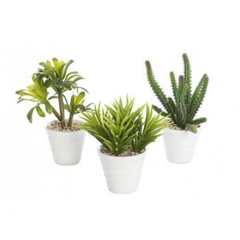 Potted Succulent x3 Pack