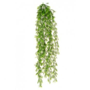 Hanging Springeri Bush UV
