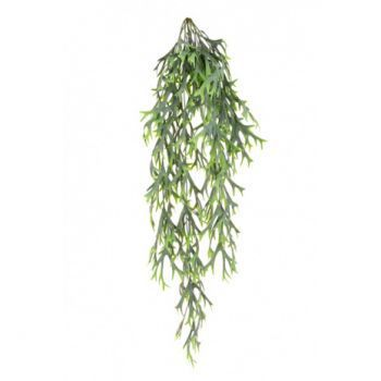 Citronella Hanging Bush UV
