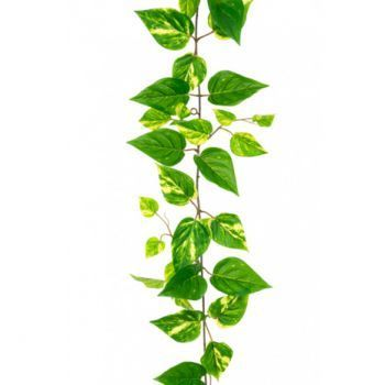Pothos Garlands UV