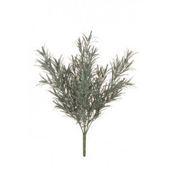 Podocarpus Bush UV
