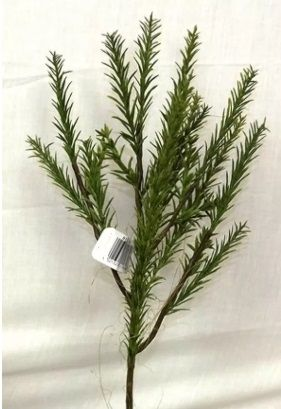 Rosemary Spray
