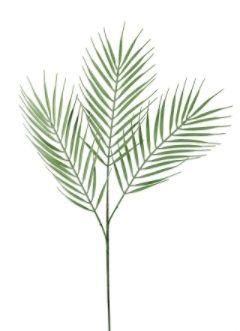 Dusty Palm Grass