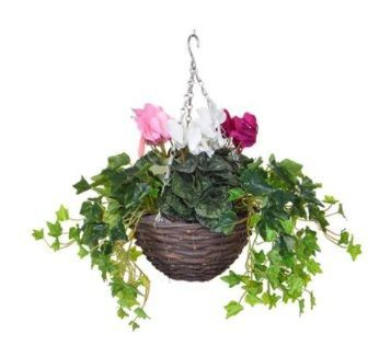 Cyclamen Mix Small Hanging Basket