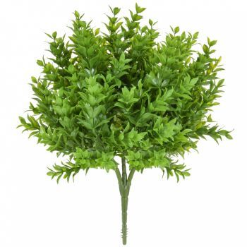Buxus Bush
