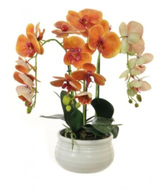 Phalaenopsis Orchid Arrangement In Lined Bowl