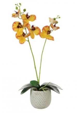 2 Stem Phalaenopsis Orchid Arrangement