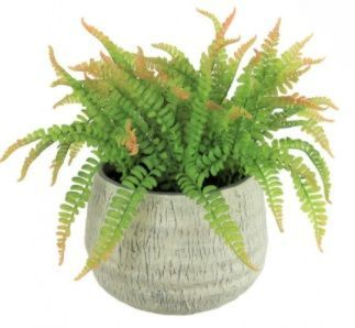 Large Potted Fern In Stone Pot