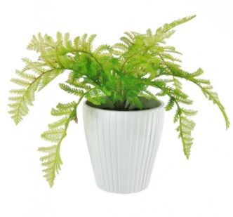 Potted Lady Fern In Ribbed Pot