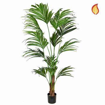 Kentia Palm Tree FR