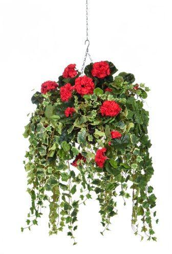 Geranium Hanging Basket FR