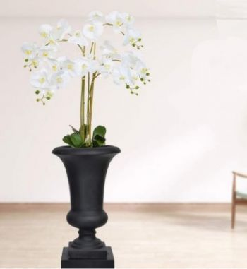 Phalaenopsis Orchids in Milan Urn 2 Pack