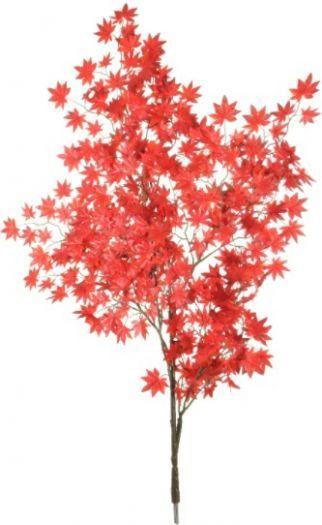 Acer Leaf Branch