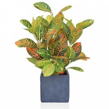 Croton Spray in Slate Pot