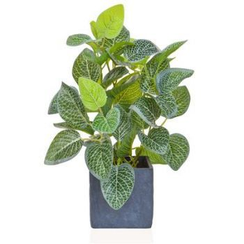 Silver Variegated Plant in Slate Pot