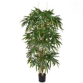 Natural Bamboo FR