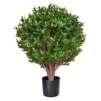 Topiary Privet Tree UV